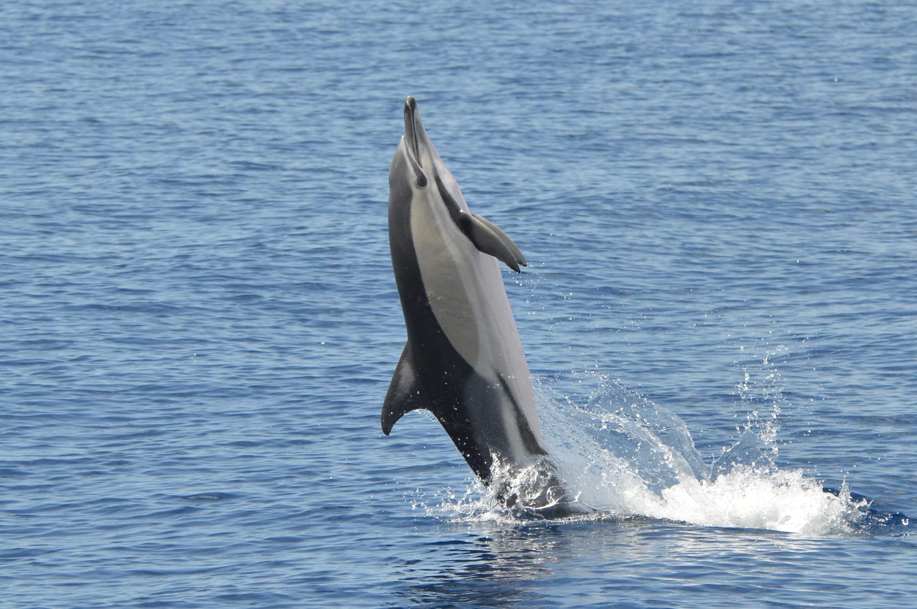 whaleexpresscommondolphin